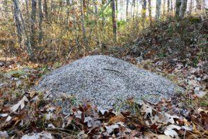 allegheny ant mound