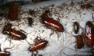 roaches and feces