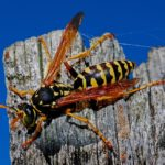 wasp image for kids